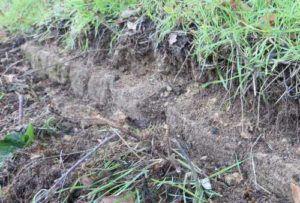 Sous la végétation, des pierres du mur de soutènement, qui portait l'Aqueduc en certains endroits.